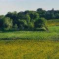 Territorio - Villa Lazzarini vini